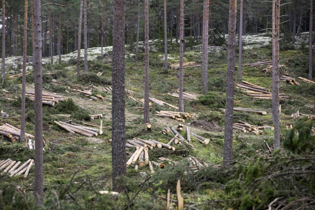 Skogsavverkning Foto: MostPhotos