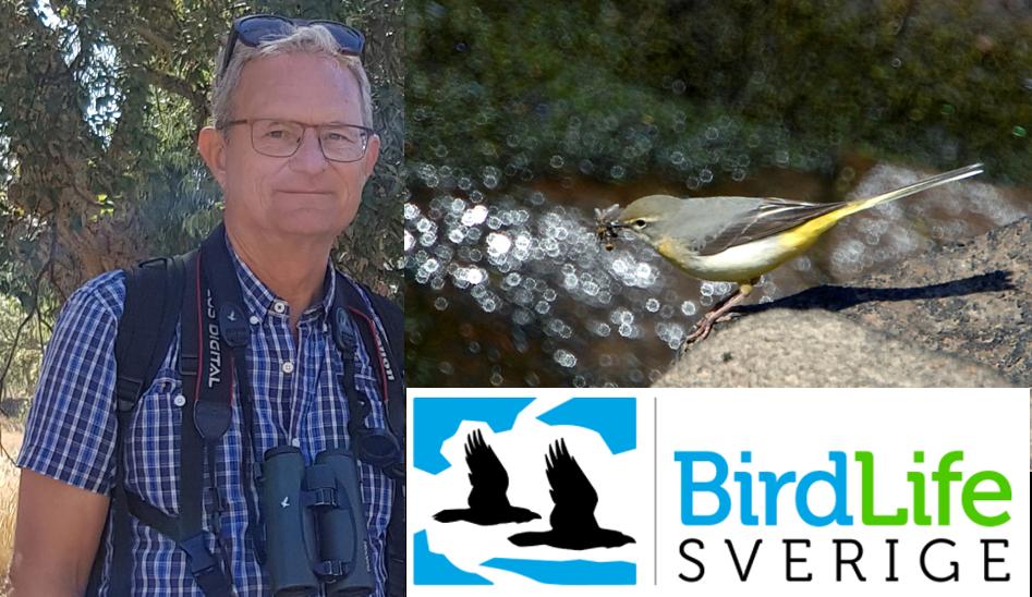Jan Linder och Bird LIfe Sverige