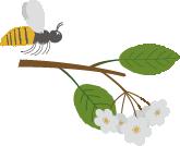 Pollineringsuppdraget Länsstyrelsen Skåne