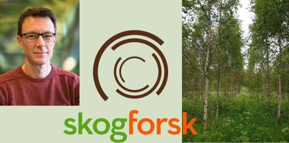 Nils Fahlvik på Skogforsk. Foto: Skogforsk